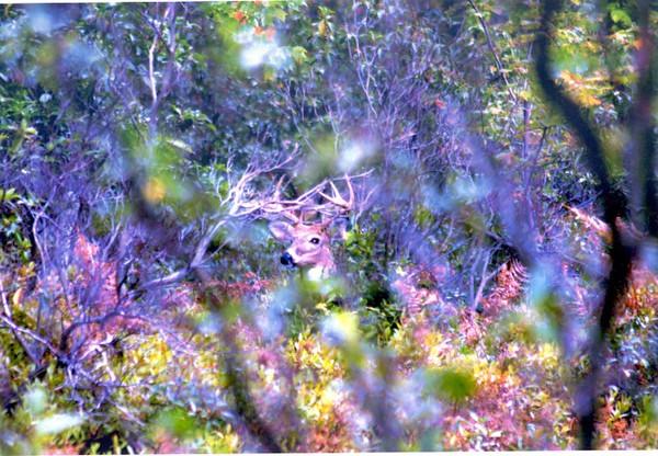 Hidden Buck 1 693X480