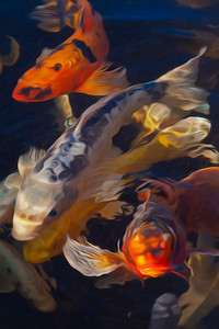 Koi Fish - Paintography