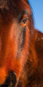 Wild Mustang, Damonte Ranch, Reno, Nevada