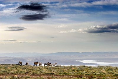 Wild Mustangs, Eagle Ridge, Stage Coach, Nevada