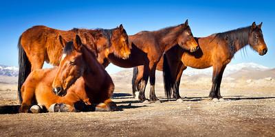 Wild Horses near Alexander Lake, Ward 3, Reno