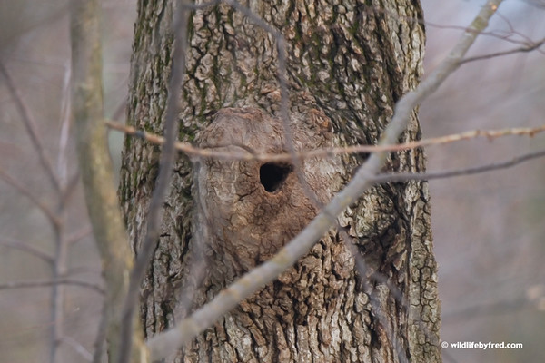This is the hole to the white squirrels nest.