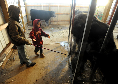 Jarrett Wagner, 12, left, shows his little brother, Justin, 6, how to scratch a steer the proper way. The Wagner family of Erie work long hours to prepare their animals for the National Western Stock Show in Denver this month. For a photo gallery and video, go to www.dailycamera.com. Cliff Grassmick / January 6, 2010