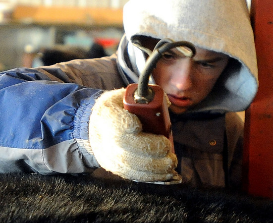 """Jake Wagner, 14, does some fine clipping work on one of the show steers for the stock show.<br /> The Wagner family of Erie work long hours to prepare their animals for the National Western Stock Show in Denver this month.<br /> For a photo gallery and video, go to  <a href=""""http://www.dailycamera.com"""">http://www.dailycamera.com</a>.<br /> Cliff Grassmick / January 6, 2010"""