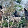 Cormorant condo life