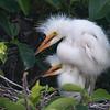 Wakodahatchee Wetlands, Florida