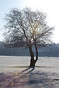 Tree with Long Shadow in the frost.