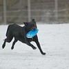 Dog in the snow with frisbee
