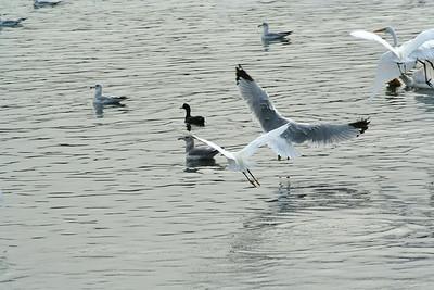 Waterfowl Bonanza