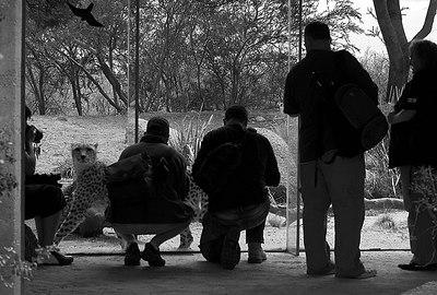 Dgrin Meet at Werribee December 2006 - Australia)