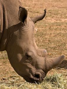 Rhino - Werribee Open Plains Zoo - Australia 2006