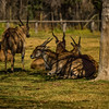 Dubbo, NSW, Australia<br /> Western Plains Zoo.