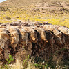Oct.12,2011 Taken south of St.George, Utah in the Arizona Strip.<br /> Harsh reality ranchers vs coyotes.