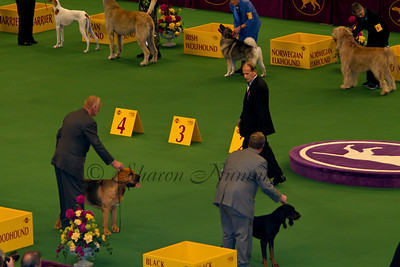 Westminster Dog Show 2011 Monday Groups