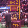 Westminster Kennel Club show 2010