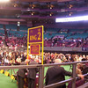 Westminster Kennel Club show 2010<br /> Day 1, 9:15am:  Ring 1 = Papillon judging, Ring 2 = Corgi judging