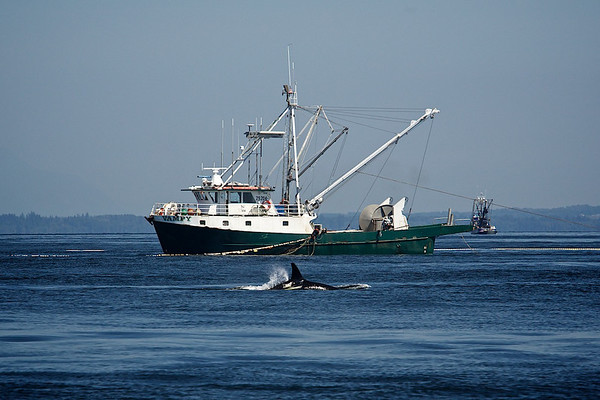 Whale Watching 8.9.14