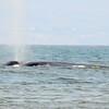 Blue Whale!