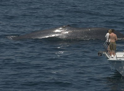 Mexico Cruise 2005  Humpback whale-Cabo San Lucas, Mexico