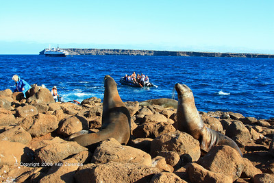 Galapagos Sea Lion welcoming party, North Seymour Island 11/01/08