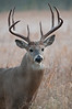 MWT-11244: Buck on a foggy morning