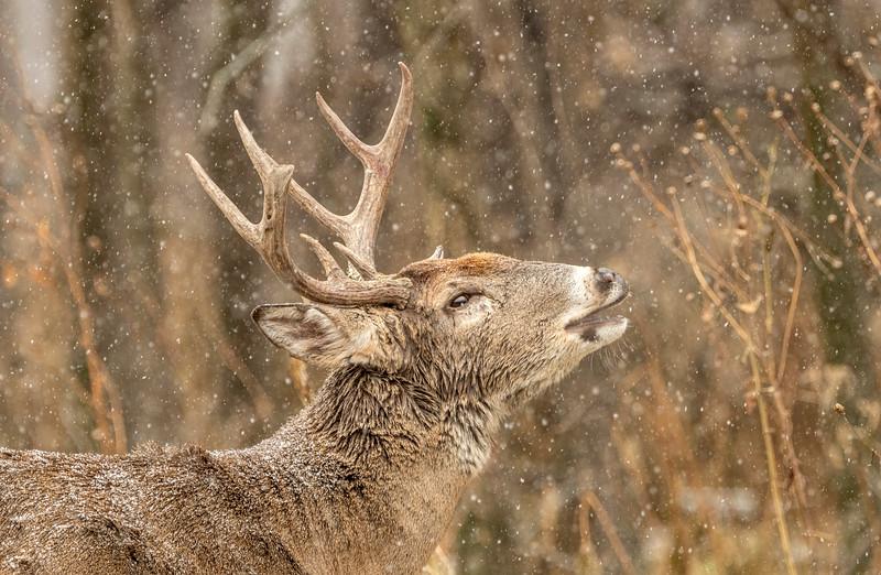 Falling snow lip curl