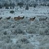 December 28, 2012 - Part of the 55 head herd