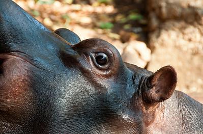 jessica-hippo-1