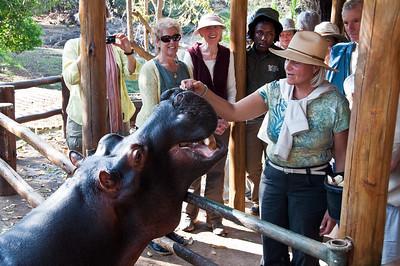 jessica-hippo-feeding-3-2