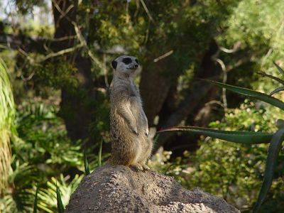 Wild Animal Park - Dusk