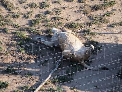 Wild Animal Sanctuary May 2012