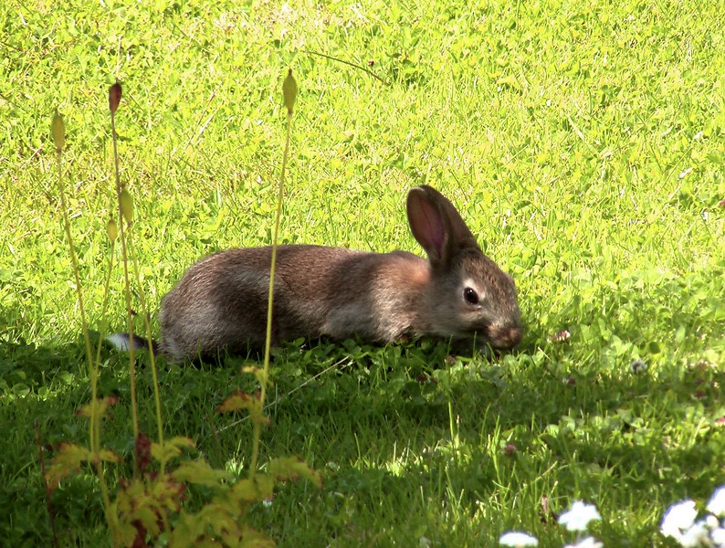 Daily visitor to my garden for 4 years.