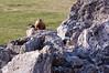 Rock Chucks at Home-0769