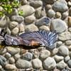 At the Hogle Zoo, Salt Lake City, Utah