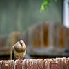 SRf2105_4195_Bird