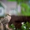 SRf2105_4189_Bird