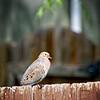 SRf2105_4186_Bird