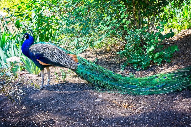 At the Tracy Aviary in Salt Lake City, Utah