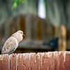 SRf2105_4187_Bird