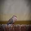 SRf2105_4180_Bird