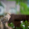 SRf2105_4190_Bird