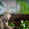 SRf2105_4191_Bird