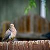 SRf2105_4194_Bird