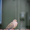 SRf2105_4179_Bird