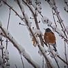 SRf2003_1975_SnowBirds