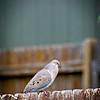 SRf2105_4185_Bird