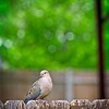 SRf2105_4181_Bird