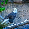At the Lincoln Park Zoo