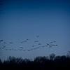 SRf1912_1736_birds