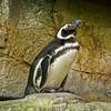 SRd1806_5388_Aquarium